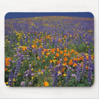 North America, USA, California, Los Angeles 2 Mouse Pad