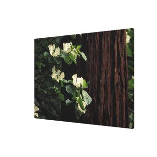 North America, USA, California, Yosemite 2 Canvas Print