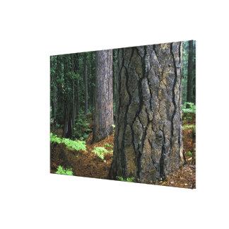 North America, USA, California, Yosemite 3 Stretched Canvas Prints