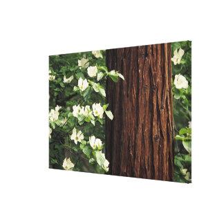 North America, USA, California, Yosemite Canvas Print