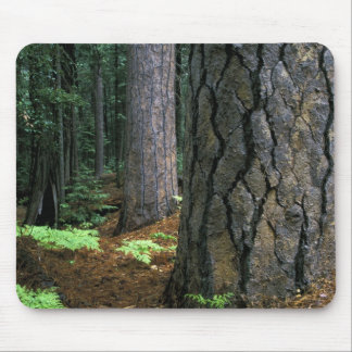 North America, USA, California, Yosemite Mouse Mat
