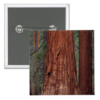 North America, USA, California, Yosemite NP, 2 15 Cm Square Badge