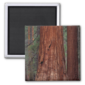 North America, USA, California, Yosemite NP, 2 Square Magnet