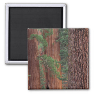 North America, USA, California, Yosemite NP, Square Magnet