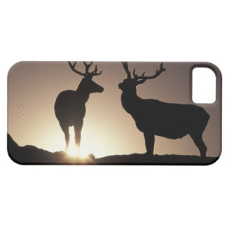 North America, USA, Colorado. Rocky Mountains Barely There iPhone 5 Case