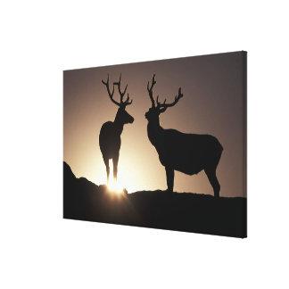 North America, USA, Colorado. Rocky Mountains Gallery Wrapped Canvas