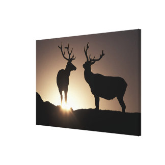 North America, USA, Colorado. Rocky Mountains Stretched Canvas Prints