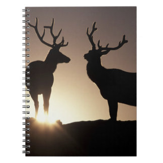 North America, USA, Colorado. Rocky Mountains Notebooks