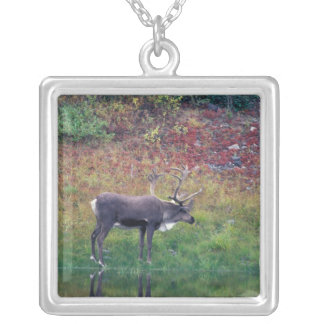 North America, USA, Denali NP, Caribou Silver Plated Necklace