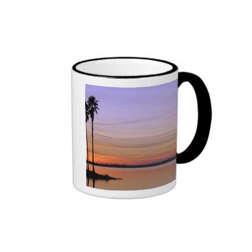 North America, USA, Florida, Mt. Dora, a trio Mugs