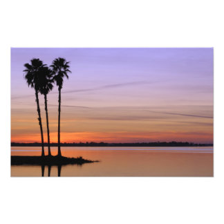 North America, USA, Florida, Mt. Dora, a trio Photo Print