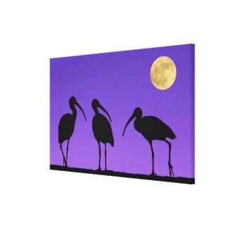 North America USA Florida Mt Dora Stretched Canvas Print