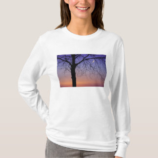 North America, USA, Florida, Mt. Dora, the T-Shirt