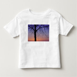 North America, USA, Florida, Mt. Dora, the Toddler T-Shirt