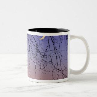 North America, USA, Florida, Mt. Dora, the Two-Tone Coffee Mug