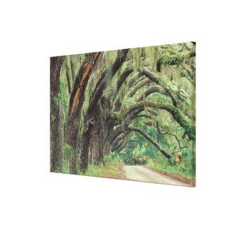 North America, USA, Georgia, Cumberland Stretched Canvas Print