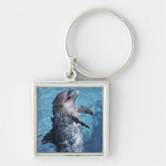 North America, USA, Hawaii. Dolphin 2 Key Ring