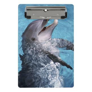 North America, USA, Hawaii. Dolphin 2 Mini Clipboard