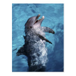 North America, USA, Hawaii. Dolphin 2 Post Cards