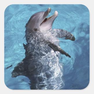 North America, USA, Hawaii. Dolphin 2 Square Sticker
