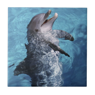 North America, USA, Hawaii. Dolphin 2 Tile