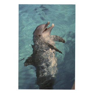 North America, USA, Hawaii. Dolphin 2 Wood Wall Art