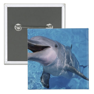 North America, USA, Hawaii. Dolphin 3 15 Cm Square Badge