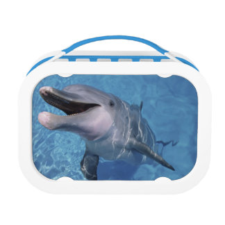 North America, USA, Hawaii. Dolphin 3 Lunch Box