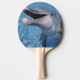 North America, USA, Hawaii. Dolphin 3 Ping Pong Paddle