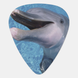 North America, USA, Hawaii. Dolphin 3 Plectrum