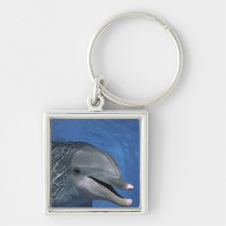 North America, USA, Hawaii. Dolphin Key Ring