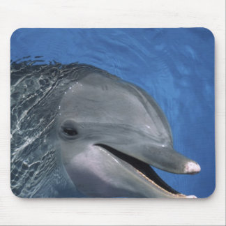 North America, USA, Hawaii. Dolphin Mouse Mat