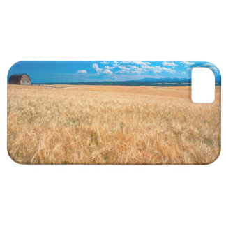 North America, USA, Idaho. Barley field in Barely There iPhone 5 Case