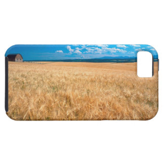 North America, USA, Idaho. Barley field in iPhone 5 Cases