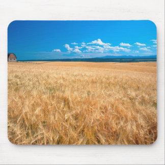 North America, USA, Idaho. Barley field in Mouse Mat