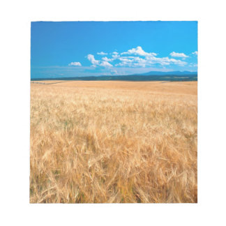 North America, USA, Idaho. Barley field in Notepad