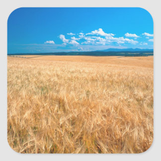 North America, USA, Idaho. Barley field in Square Sticker