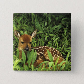 North America, USA, Minnesota. White-tailed 15 Cm Square Badge