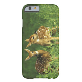 North America, USA, Minnesota. White-tailed 2 Barely There iPhone 6 Case