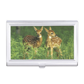 North America, USA, Minnesota. White-tailed 2 Business Card Holder