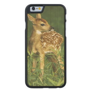 North America, USA, Minnesota. White-tailed 2 Carved Maple iPhone 6 Case