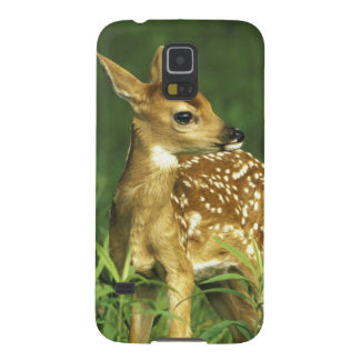 North America, USA, Minnesota. White-tailed 2 Galaxy S5 Case