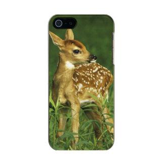 North America, USA, Minnesota. White-tailed 2 Incipio Feather® Shine iPhone 5 Case