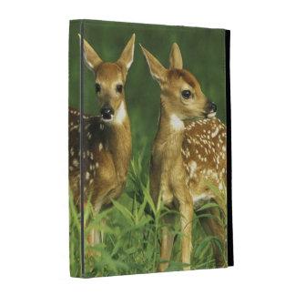 North America, USA, Minnesota. White-tailed 2 iPad Folio Covers