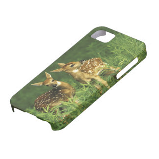 North America, USA, Minnesota. White-tailed 2 iPhone 5 Cover