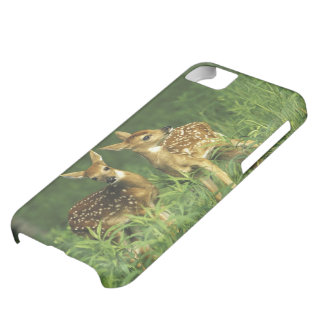 North America, USA, Minnesota. White-tailed 2 iPhone 5C Case