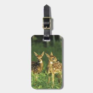 North America, USA, Minnesota. White-tailed 2 Luggage Tag