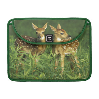 North America, USA, Minnesota. White-tailed 2 MacBook Pro Sleeve