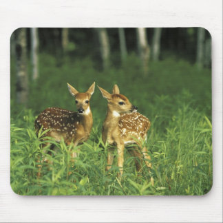 North America, USA, Minnesota. White-tailed 2 Mouse Mat