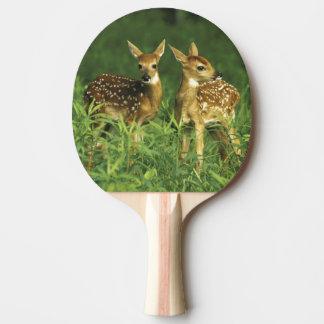 North America, USA, Minnesota. White-tailed 2 Ping Pong Paddle